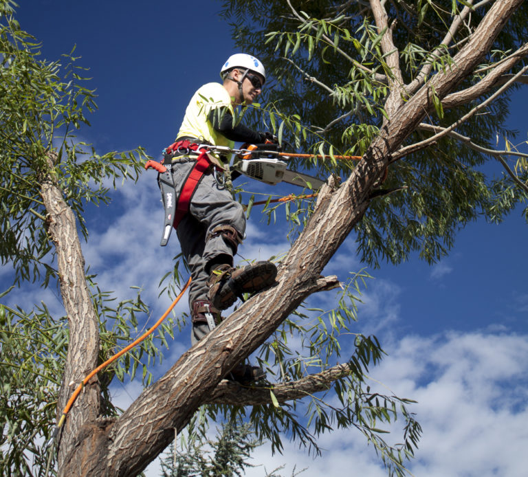 Tree Pruning - An employee pruning tree branches in Melbourne suburb