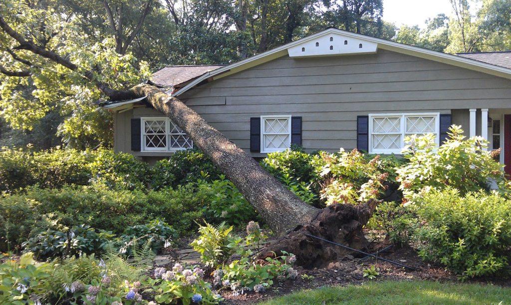 emergency-tree-removal (1)