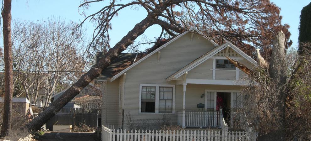 emergency-tree-removal