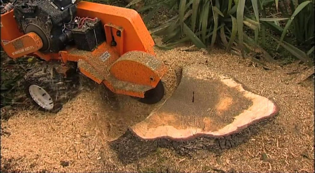 stump removal melbourne - same day tree works