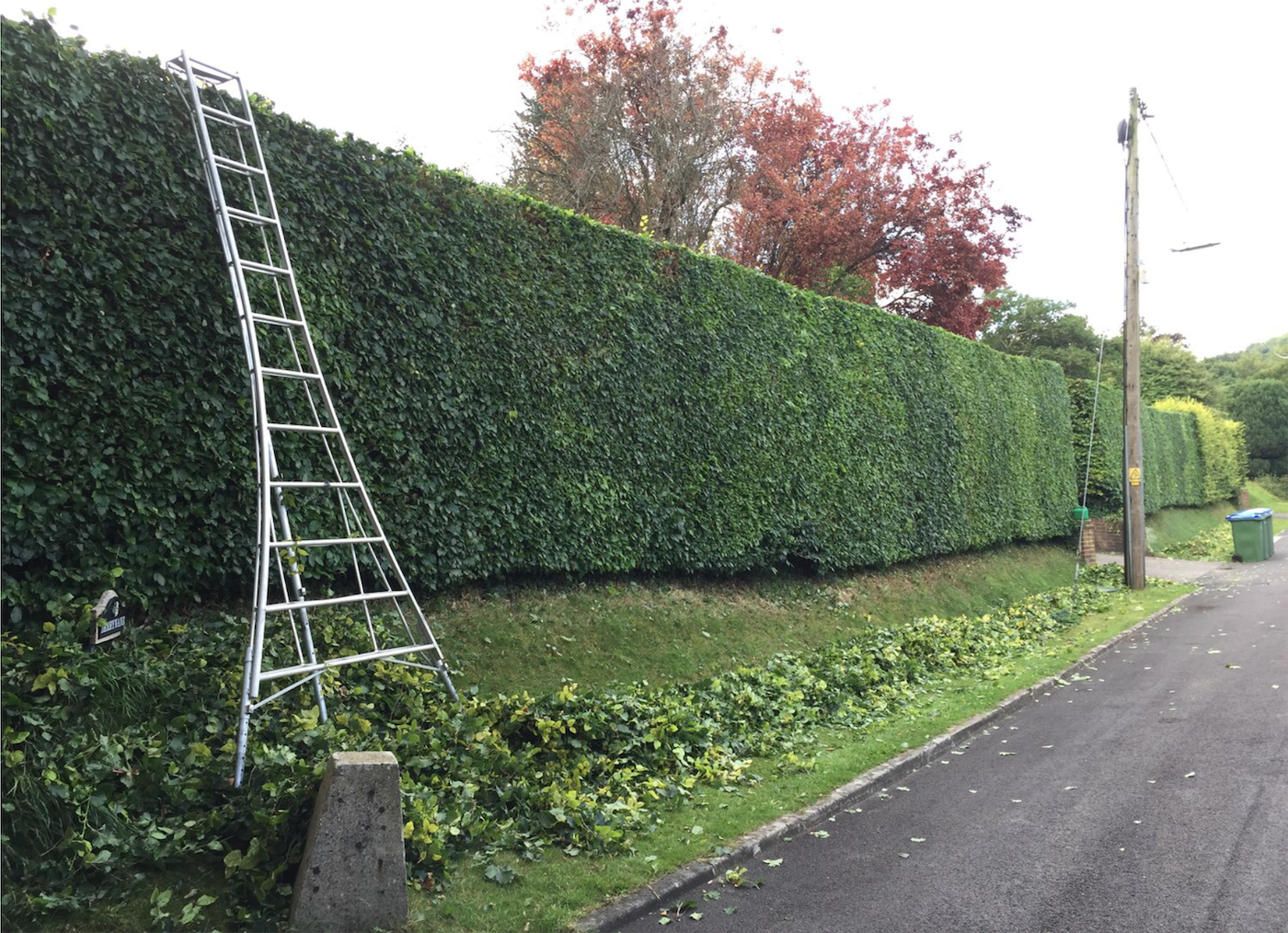 hedge trimming melbourne