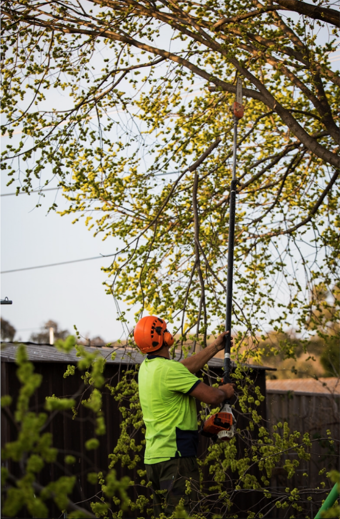A worker removing tree branches in melbourne