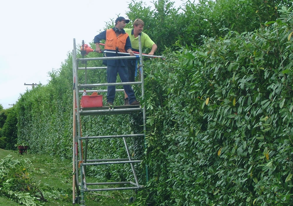 hedge trimming service near me