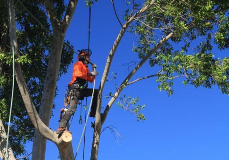 Tree-Removal-Services-e1619090935630