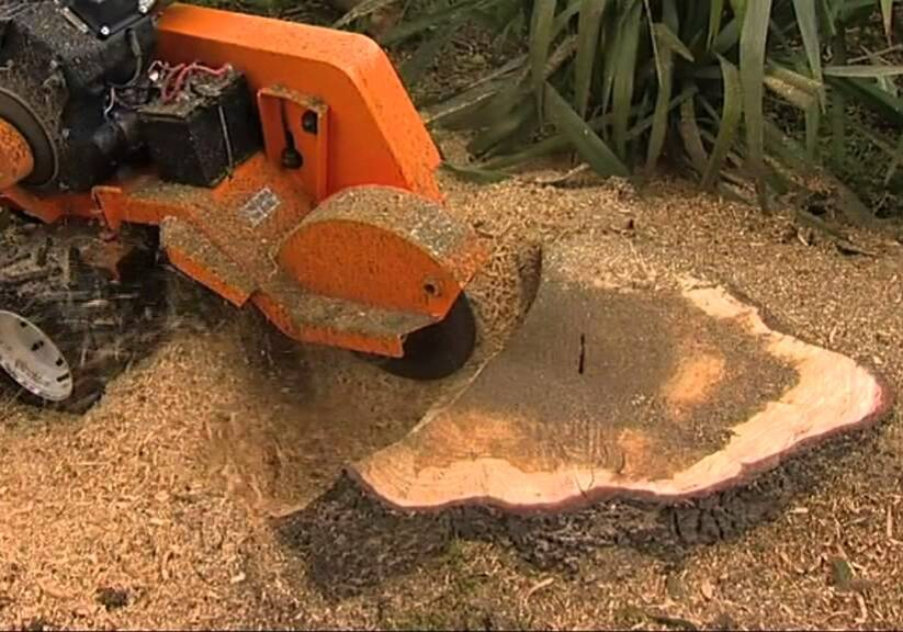 stump removal melbourne - same day tree works