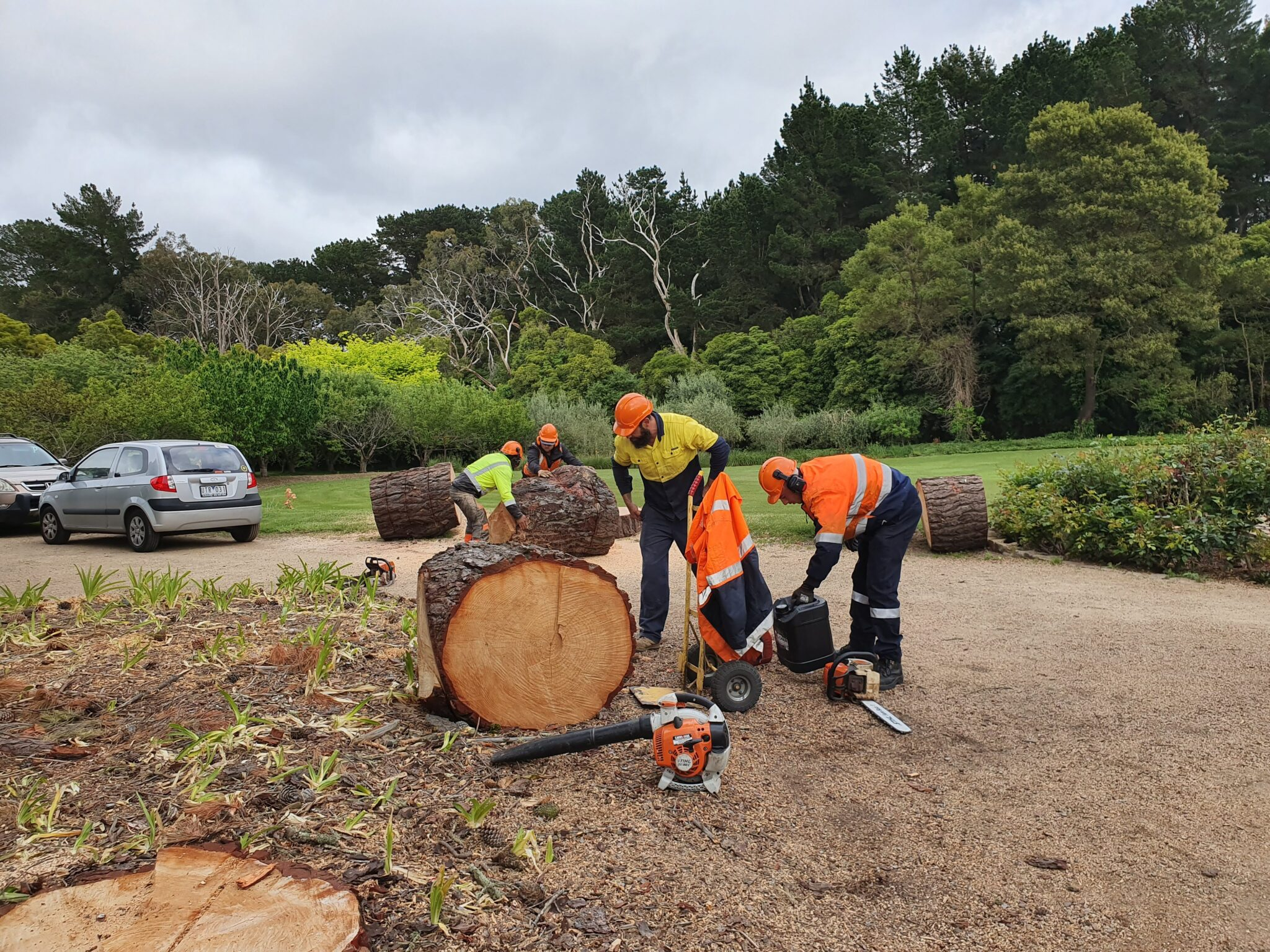 Affordable Tree Services Melbourne   Get A Free Quote   Same Day Tree Works